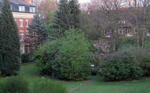 Garten-vor-abholzung1