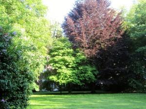 Garten_mit_Bäumen3
